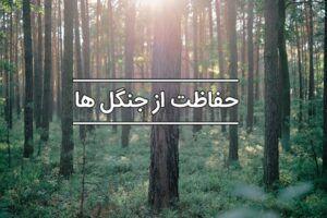 قانون حفاظت از جنگل ها